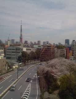 東京タワーと桜